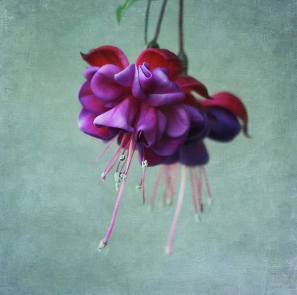 Horizontal Poster featuring the photograph Fuschia Flower by Kim Hojnacki