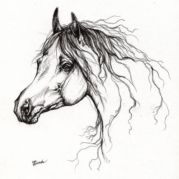 Horse Poster featuring the drawing Arabian Horse Drawing 37 by Angel Tarantella