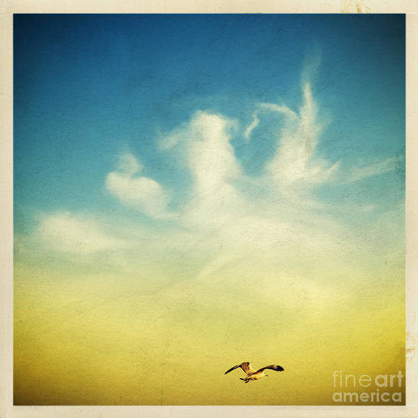 Air Poster featuring the photograph Lonely Seagull by Setsiri Silapasuwanchai