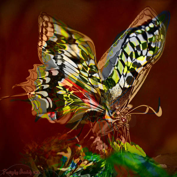 Original Works Signed Numbering Limit Canvas Poster featuring the photograph Enchanted Butterfly. First. by Tautvydas Davainis