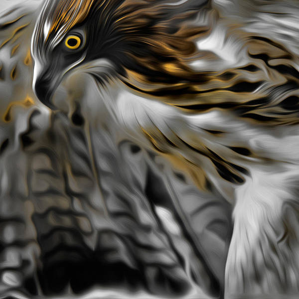 Redtail Hawk Poster featuring the photograph I Am Redtail Square by Bill Wakeley