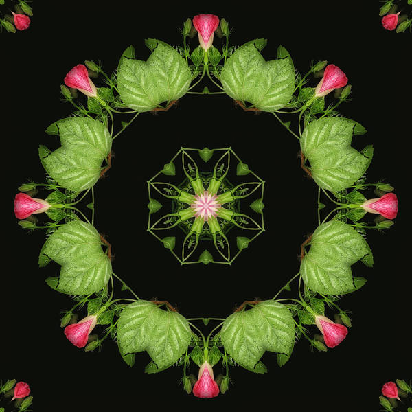 Hibiscus Poster featuring the digital art Joining The Dance by Wendy J St Christopher