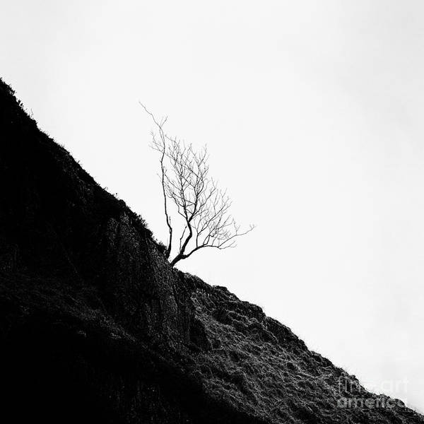 Beautiful Scotland Poster featuring the photograph Misty Tree Glen Etive by John Farnan