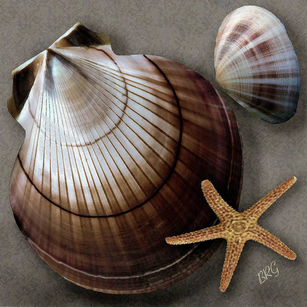 Seashell Poster featuring the photograph Seashells Spectacular No 38 by Ben and Raisa Gertsberg