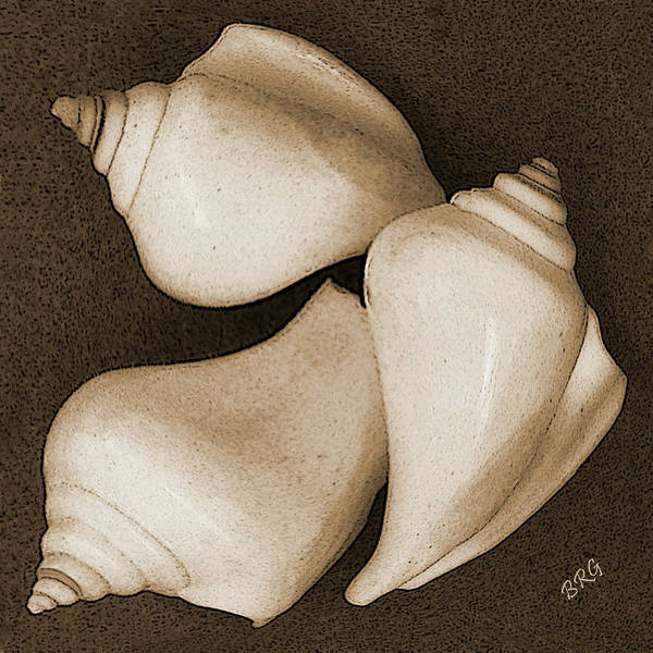 Seashell Poster featuring the photograph Seashells Spectacular No 4 by Ben and Raisa Gertsberg
