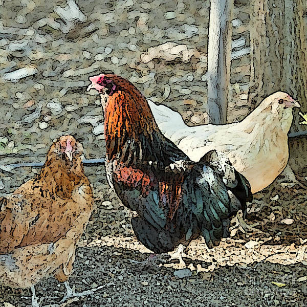 Rooster Art Poster featuring the photograph The Rooster And His Hens by Artist and Photographer Laura Wrede