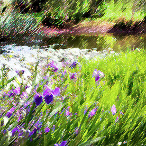 Iris Poster featuring the photograph Iris And Water by Linde Townsend