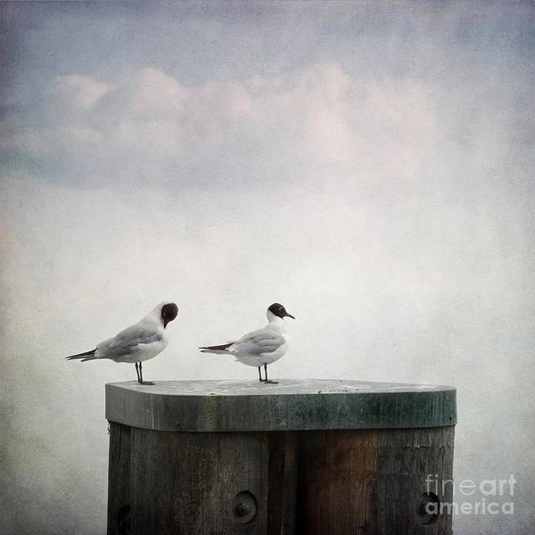 Birds Poster featuring the photograph Seagulls by Priska Wettstein