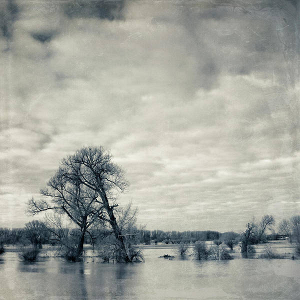Square Poster featuring the photograph Trees In River Rhine by Dirk Wüstenhagen Imagery
