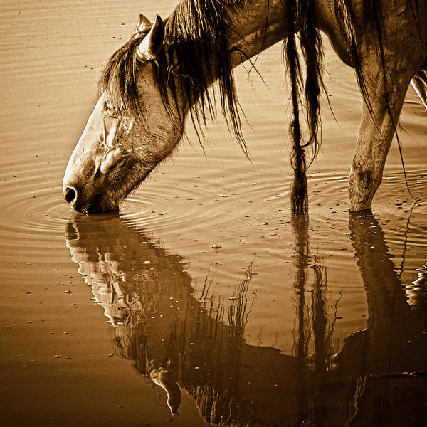 Equine Poster featuring the photograph Somewhere West Of Laramie by Ron McGinnis