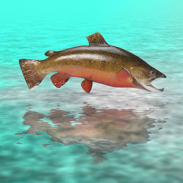 Trout Poster featuring the photograph Big Fish by Jerry McElroy