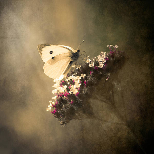 Loriental Poster featuring the photograph Butterfly Spirit #01 by Loriental Photography