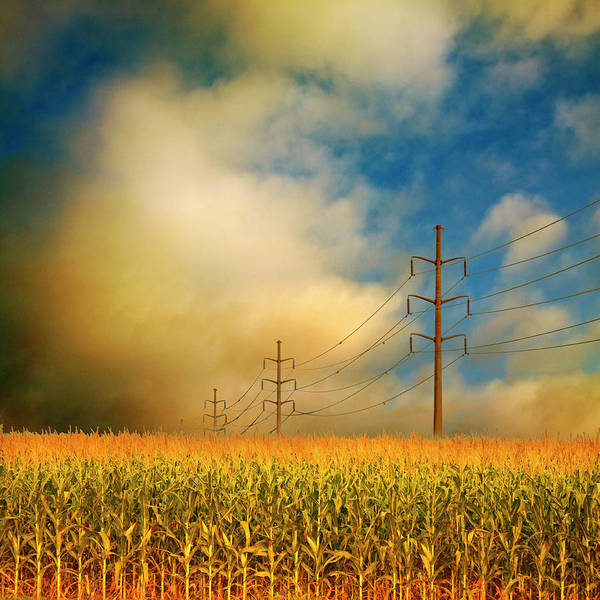 Square Poster featuring the photograph Corn Field At Sunrise by Photo by Jim Norris