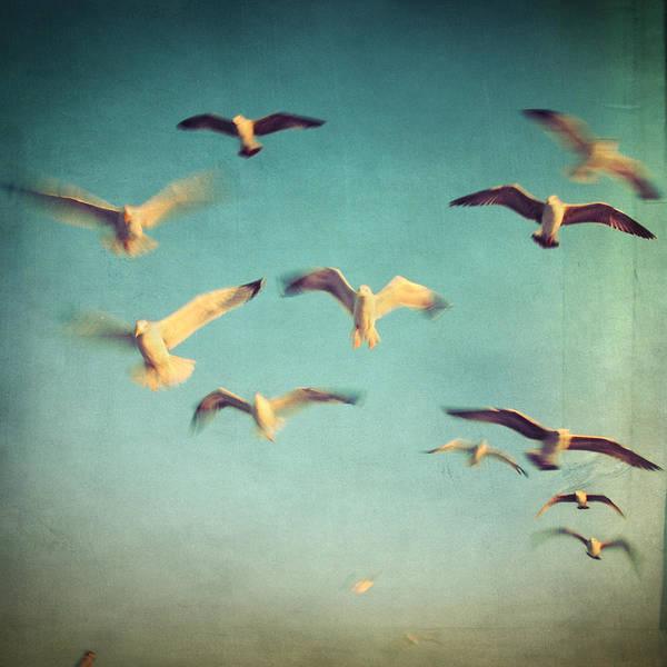 Retro Poster featuring the photograph Dans Avec Les Oiseaux by Taylan Apukovska