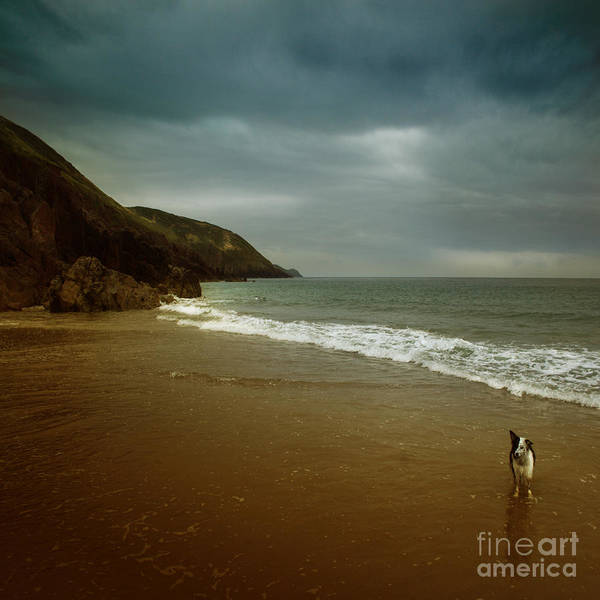 Beach Poster featuring the photograph Pembrokeshire by Angel Tarantella