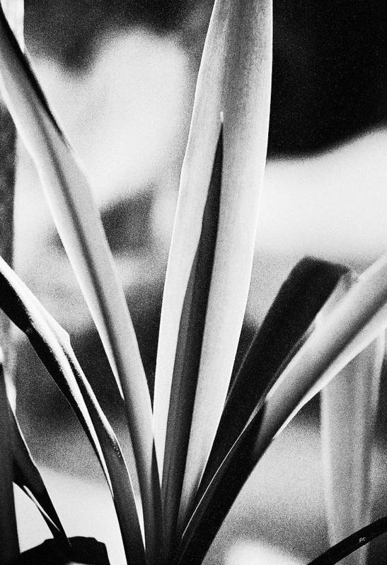 Black And White Poster featuring the photograph Yucca by Gerlinde Keating - Galleria GK Keating Associates Inc