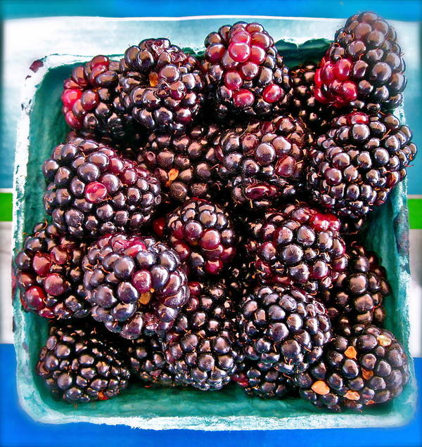 Photograph Of Berries Poster featuring the photograph Gotta Have These by Gwyn Newcombe