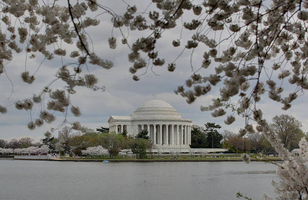 America Poster featuring the photograph Cherry Blossoms With Jefferson Memorial - Washington Dc - 01137 by DC Photographer