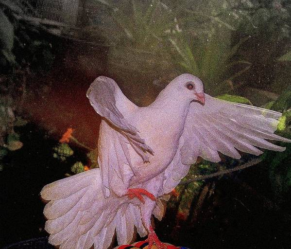 Dove Poster featuring the mixed media The Dance by YoMamaBird Rhonda