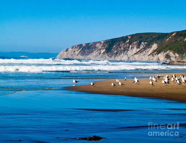 Pt Reyes Poster featuring the photograph Pt Reyes National Seashore by Bill Gallagher