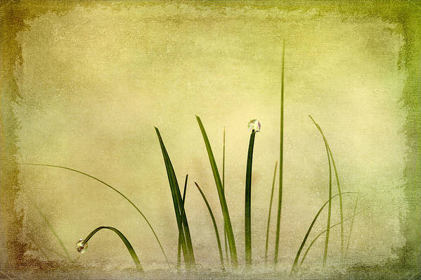 Abstract Poster featuring the digital art Grass by Svetlana Sewell
