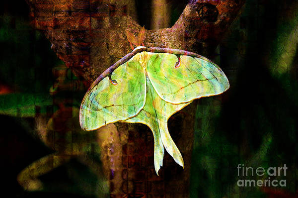 Abstract Poster featuring the photograph Abstract Luna Moth Painterly by Andee Design