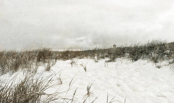 Along The Cape Cod National Seashore Poster featuring the photograph Along The Cape Cod National Seashore by Michelle Wiarda