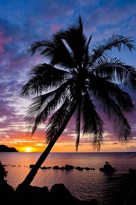 Hawaii Poster featuring the photograph Anini Palm by Adam Pender