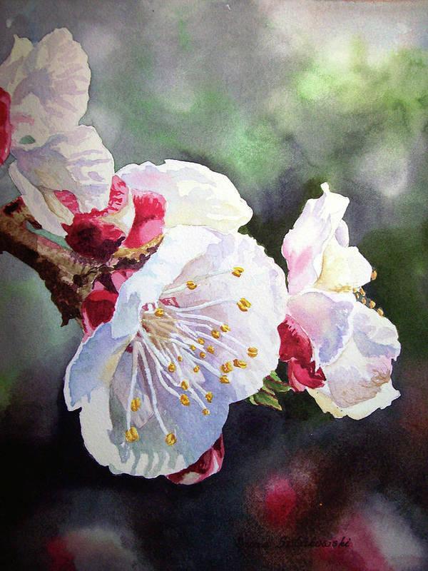 Apricot Poster featuring the painting Apricot Flowers by Irina Sztukowski