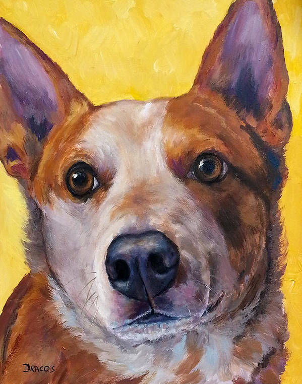 Red Heeler Poster featuring the painting Australian Cattle Dog Red Heeler On Yellow by Dottie Dracos