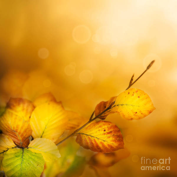 Abstract Poster featuring the photograph Autumn Leaves by Mythja Photography