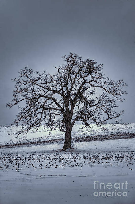 Barren Winter Scene With Tree Poster by Dan Friend