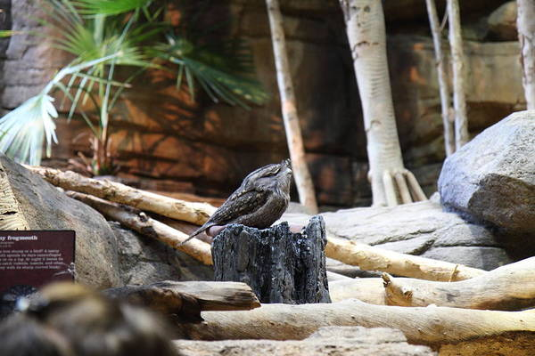 Inner Poster featuring the photograph Bird - National Aquarium In Baltimore Md - 12129 by DC Photographer