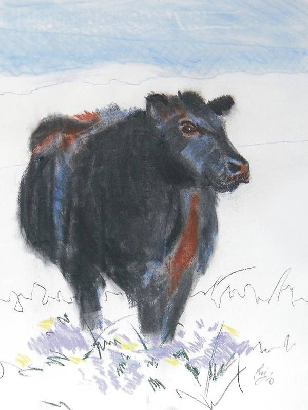 Mike Jory Cow Poster featuring the painting Black Cow Drawing by Mike Jory