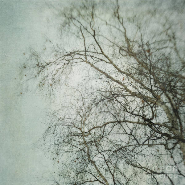 Twig Poster featuring the photograph bleakly II by Priska Wettstein