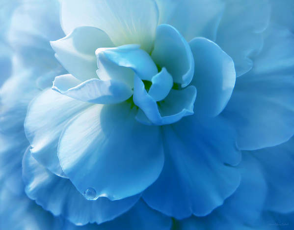 Begonia Poster featuring the photograph Blue Begonia Flower by Jennie Marie Schell