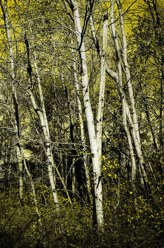Trees Poster featuring the photograph Briers And Brambles by Luke Moore