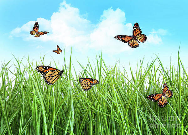 Backyard Poster featuring the photograph Butterflies In Tall Wet Grass by Sandra Cunningham