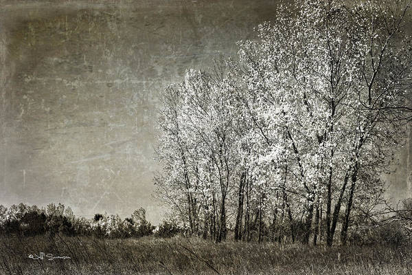Autumn Poster featuring the photograph Colorless Fall by Jeff Swanson