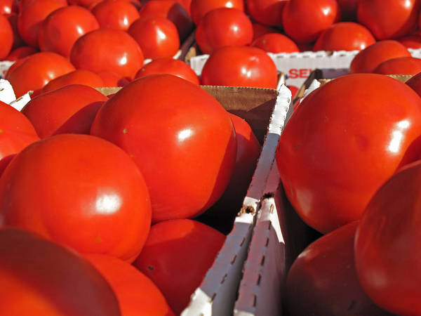Tomato Poster featuring the photograph Cool Tomatoes by Barbara McDevitt