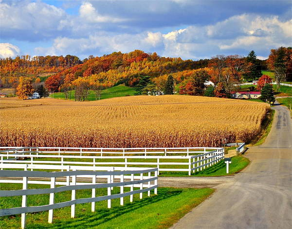 Country Poster featuring the photograph Country Lane by Frozen in Time Fine Art Photography