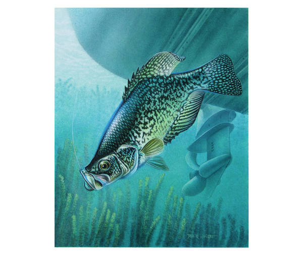 Jon Q Wright Poster featuring the painting Crappie And Boat by JQ Licensing