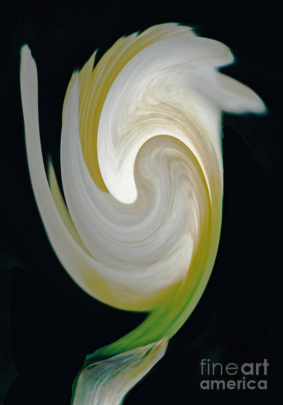 Art Poster featuring the photograph Daffodil Bloom Swirled Digital Art by ImagesAsArt Photos And Graphics