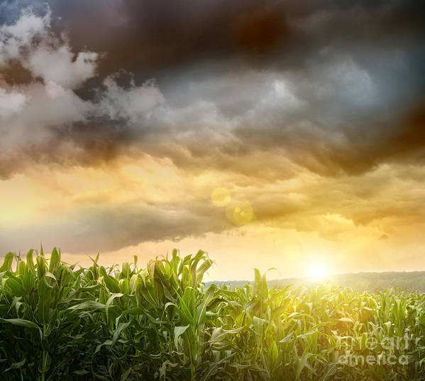 Agricultural Poster featuring the digital art Dark Skies Looming Over Corn Fields by Sandra Cunningham