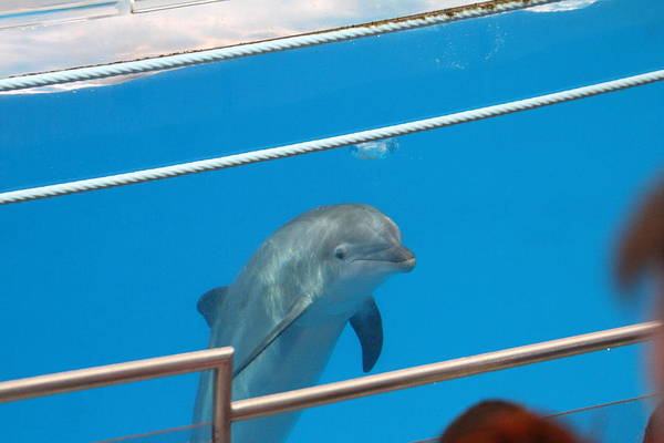 Inner Poster featuring the photograph Dolphin Show - National Aquarium In Baltimore Md - 1212193 by DC Photographer
