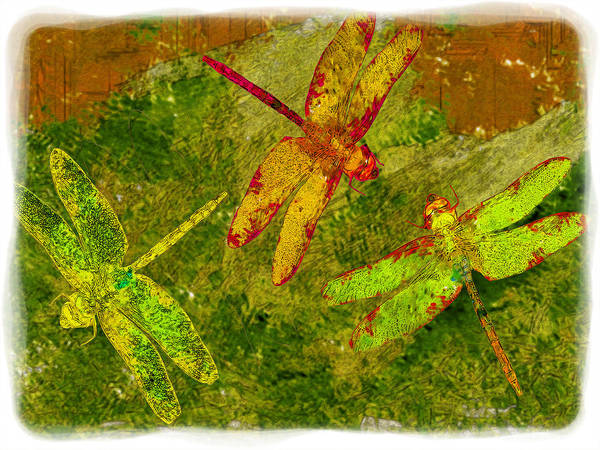 Insect Poster featuring the photograph Dragonflies Abound by Jack Zulli