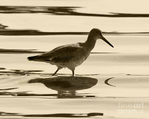 Gaviota Poster featuring the photograph Early Morning In The Moss Landing Harbor Picture Of A Willet by Artist and Photographer Laura Wrede