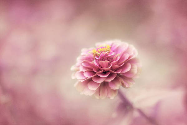 Pink Flower Poster featuring the photograph Fairytale Ending by Amy Tyler