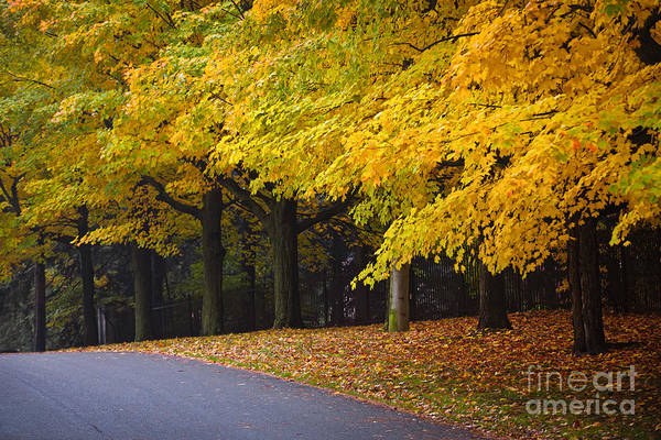 Fall Poster featuring the photograph Fall Road And Trees by Elena Elisseeva