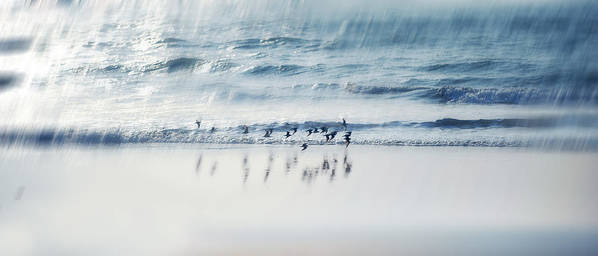 Birds.flying Birds Poster featuring the photograph Flying Free by Jenny Rainbow